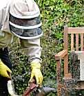 Bees in a Garden