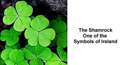 Shamrocks - one of the symbols of Ireland
