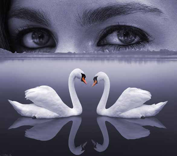 Mythical Swans