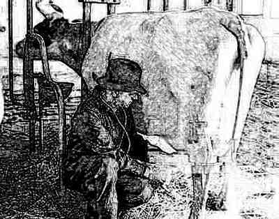 Vet with Cow
