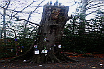 Fairy-Tree-Castle