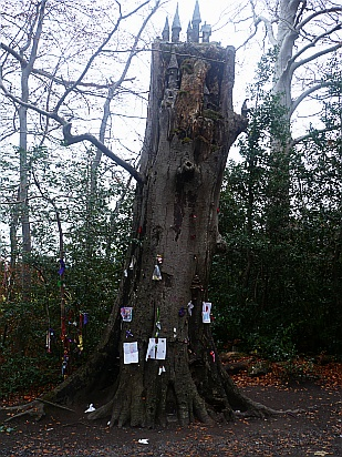 Fairy tree Rathfarnham - Public Domain Photograph