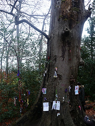 Fairy tree donations - Public Domain Photograph, Free Stock Photo Image, Free Picture