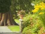 Flower-pot-with-tree-Birr-Castle