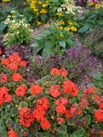 Flowers-red-purple-orange-yellow-green