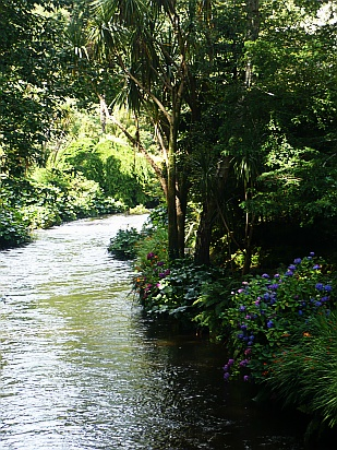 Mount Usher Gardens Wicklow - Public Domain Photograph, Free Stock Photo Image, Free Picture