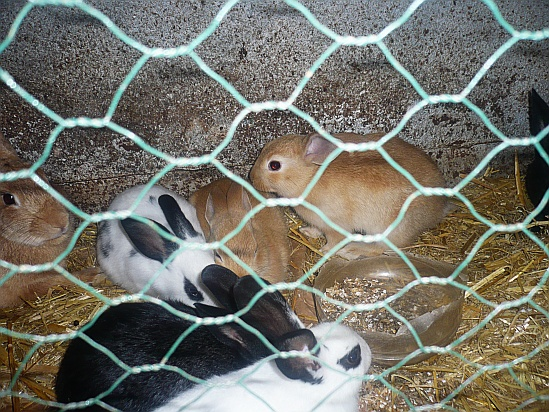 Rabbits in cage - Public Domain Photograph, Free Stock Photo Image, Free Picture