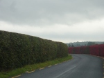Red-Hedge