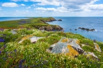 Saltee-Islands-Wexford