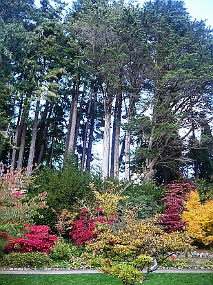 Trees with colorful shrubs - Public Domain Photograph, Free Stock Photo Image, Free Picture