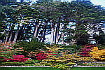 Trees-with-colorful-shrubs