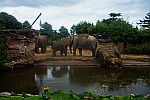 Zoo-Elephants-Dublin