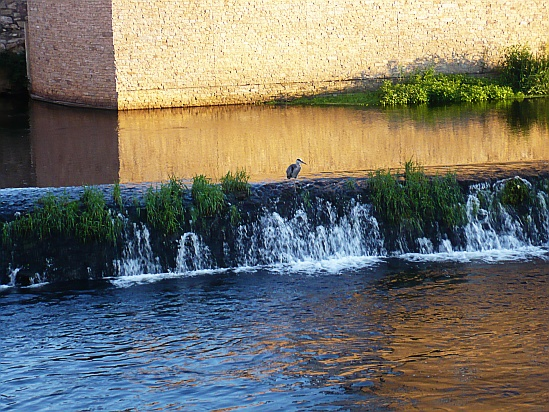Bird on waterfall - Public Domain Photograph, Free Stock Photo Image, Free Picture