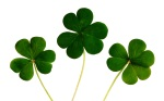 clover-shamrocks