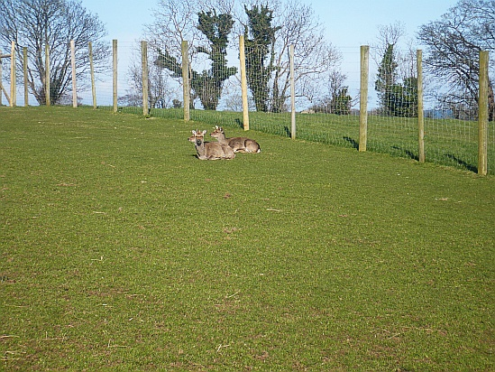 Deer resting - Public Domain Photograph