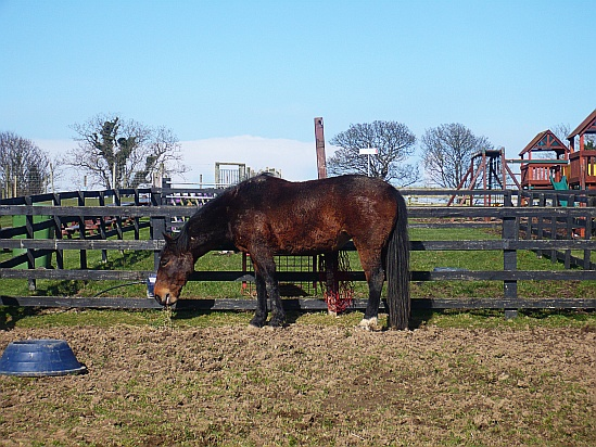 Horse in paddock - Public Domain Photograph, Free Stock Photo Image, Free Picture