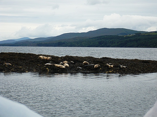 Seals - Public Domain Photograph
