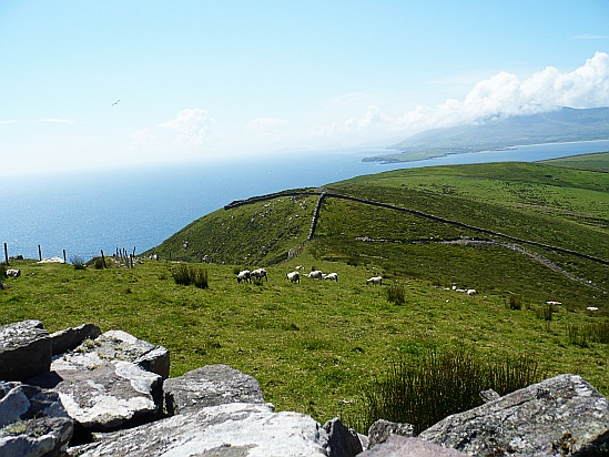 Sheep near cliffs - Public Domain Photograph, Free Stock Photo Image, Free Picture