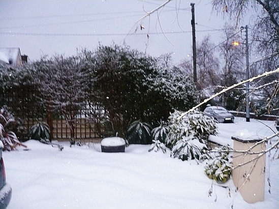 Snowscene in garden - Public Domain Photograph, Free Stock Photo Image, Free Picture