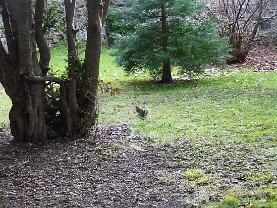 Squirrel feeding - Public Domain Photograph, Free Stock Photo Image, Free Picture