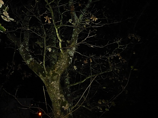 Tree at night - Public Domain Photograph, Free Stock Photo Image, Free Picture